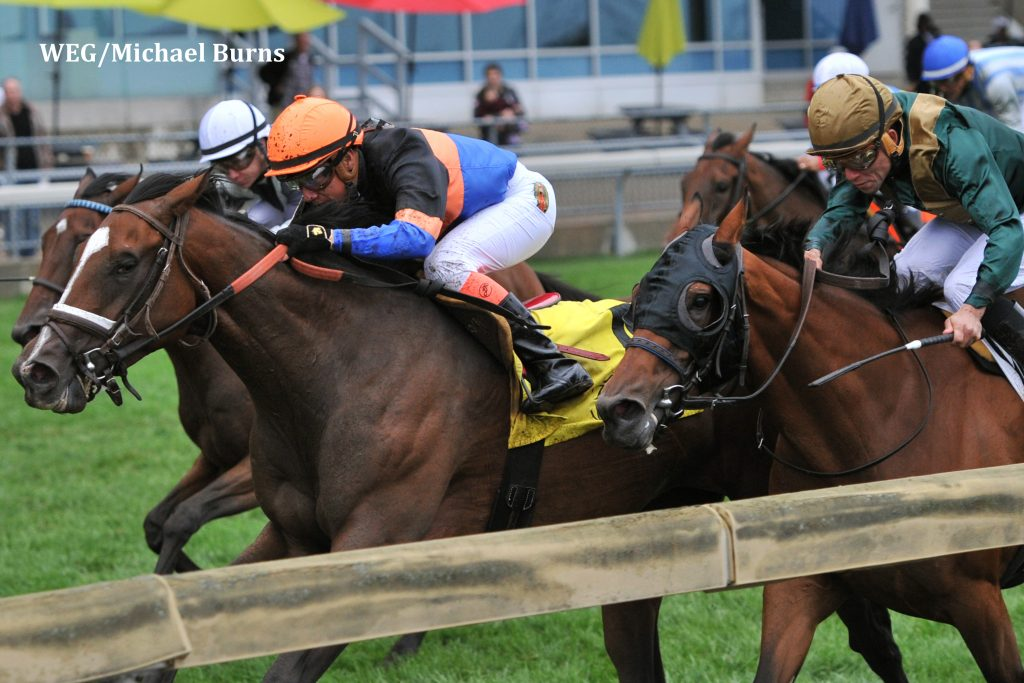 Toronto Ont.September 13, 2015.Woodbine Racetrack.Canadian Stakes.Jockey Luis Contreras guides Strut the Course to victory in the $300,000 dollar Canadian Stakes at Woodbine.Strut the Course is owned by John Unger and trained by Barb Minshall. michael burns photo